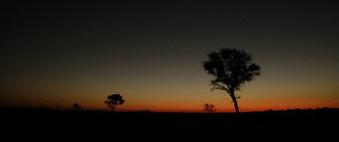 Colours of the night night,night time,evening,stars,sky,sunset,silhouette,trees,colour,colours,panorama