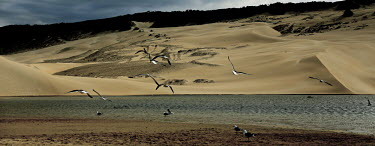 Fly over the world bird,birds,sky,sand,dunes,sand dunes,water,seagulls,fly,flight,landscape,panorama