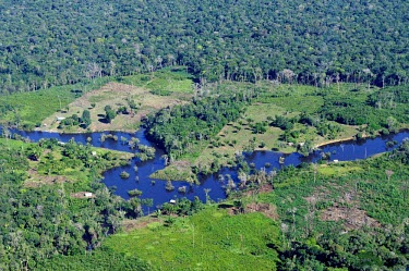 Aerial view of the Amazon Rainforest, near Manaus brazil,latin america,horizontal,forest,forests,rainforests,rainforest,river,amazon,aerial,spanish,climate change,global warming,deforestation,green,blue,degraded,cleared,clearing