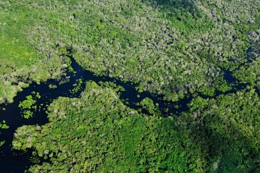 Aerial view of the Amazon rainforest and river, near Manaus Brazil,latin america,horizontal,forest,river,amazon,aerial,spanish,forests,climate change,global warming,rainforests,green,looking down,abstract,pattern,trees,brazil