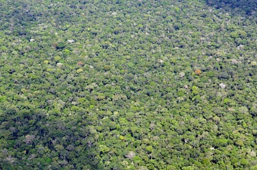 Aerial view of the Amazon rainforest and river, near Manaus Brazil,horizontal,america,forest,amazon,aerial,spanish,latin,forests,climate change,global warming,rainforest,rainforests,canopy,cover,abstract,green,trees,brazil,latin america