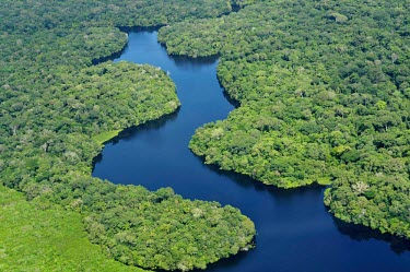 Aerial view of the Amazon rainforest and river, near Manaus Brazil,latin america,horizontal,river,amazon,forestry,aerial,spanish,forest,forests,climate change,global warming,rainforest,rainforests,pattern,green,blue,water,calm,still,lush,brazil
