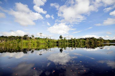 General View of the Brazilian Amazon Brazil,Latin america,water,horizontal,forest,river,amazon,spanish,forests,climate change,global warming,rainforest,rainforests,reflection,blue sky,clouds,wide angle,still,brazil,latin america
