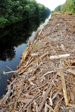 Water channel at cleared peatland area in Indonesia horizontal,forest,indonesia,fire,forests,climate change,global warming,rainforest,rainforests,peat,land,cleared land,cleared,land clearance,wood,water,water channel,edge,destruction,peatland