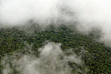 Aerial view of the Amazon rainforest and river, near Manaus Brazil,latin america,amazon,aerial,spanish,rainforests,climate change,forest,forests,global warming,horizontal,abstract,canopy,clouds,brazil
