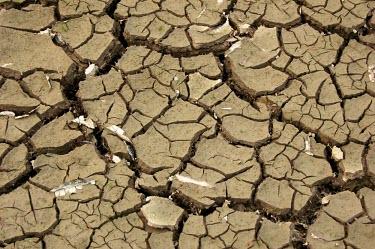 Dried land in Lake Sentarum africa,horizontal,kenya,dry,soil,mud,climate change,global warming,crack,cracked,earth,ground,shallow focus,green,shoot,abstract,pattern,sentarum