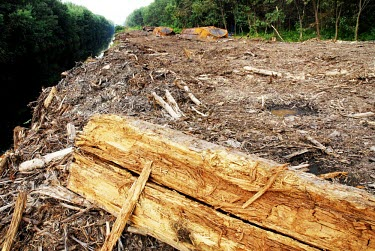 Cleared peatland in Indonesia horizontal,forest,indonesia,fire,forests,climate change,global warming,rainforest,rainforests,peat,land,cleared land,cleared,land clearance,wood,timber,water,water channel,edge,destruction,peatland
