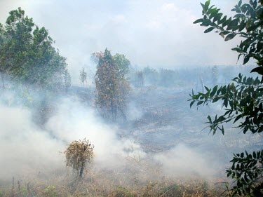 Forest fires are mostly caused by human activity horizontal,forest,indonesia,fire,smoke,fires,forest fires,forest fire,kalimantan,palang karaya,habitat,destruction,fog,palangkaraya,cifor