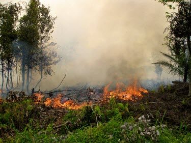 Forest fires are mostly caused by human activity horizontal,forest,indonesia,fire,smoke,fires,forest fires,forest fire,kalimantan,palang karaya,habitat,destruction,burnt,black,fog,cifor,palangkaraya