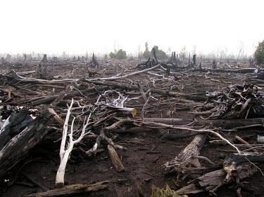 Damage of the forest fire horizontal,forest,indonesia,fire,fires,forest fires,forest fire,kalimantan,palangkaraya,burnt,black,blackened,destruction,habitat destruction,human activity,cifor,smoke,fog