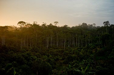 A cacao plantation near the forests sunset,horizontal,forest,Ecuador,low light,conservation,scene,spanish,coca,napo,climate change,deforestation,cacao,horizontals,cacao plantation,plantation,plantations,forests,landscape