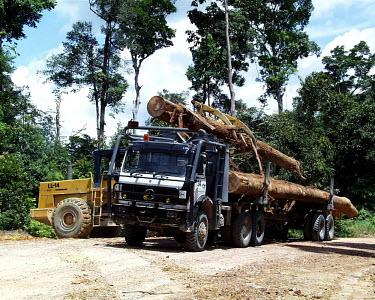 Log loader loading logs on to a truck, Indonesia horizontal,forest,truck,indonesia,flickr,logs,logging,climate change,transportation,land,lumber,wood,log,trunk,timber,deforestation