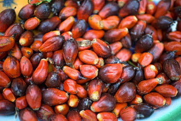 Palm Nuts in the village of Minwoho africa,horizontal,close up,close-up,foods,food,markets,crops,crop,cameroon,peanut oil,biofuel,bio energy,oil seeds,brown,seeds,deforestation,palm oil