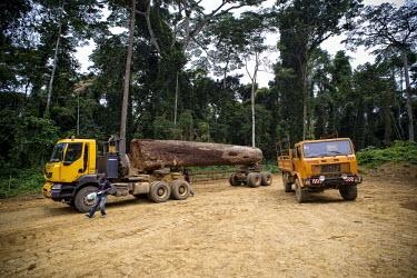 Wood Truck for the Company, Fabrique Camerounaise africa,road,horizontal,truck,landscape,logs,transportation,land,congo,climate change,lumber,cameroon,ngon,ebolowa,wood,log,logging,trunk,timber,huge,big,deforestation