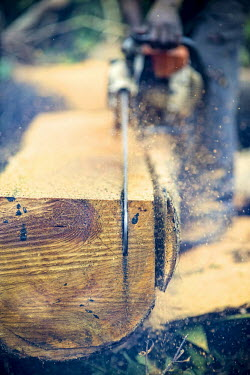 Carpenter chainsawing a felled tree africa,wood,people,man,tree,close up,close-up,forest,cut,chainsaw,chain saw,logging,environment,forests,climate change,global warming,wood cutting,cameroon,verticals,timber,shallow focus,deforestation