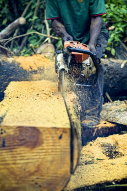Carpenter chainsawing a felled tree africa,wood,people,man,tree,close up,close-up,forest,cut,chainsaw,chain saw,logging,environment,forests,climate change,global warming,wood cutting,cameroon,verticals,timber,deforestation