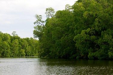 Mangrove forests around Yoke village lake,horizontal,forest,indonesia,asia,mangrove,papua,climate change,climate,yoke,horizontals,mamberamo,green,trees