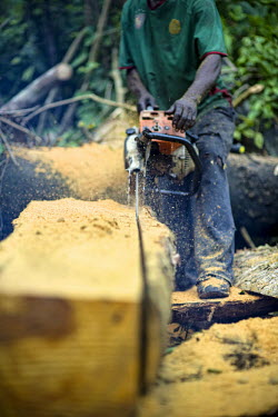 Carpenter chainsawing a felled tree africa,wood,people,man,tree,close up,close-up,forest,cut,chainsaw,chain saw,logging,equipment,environment,congo,forests,climate change,global warming,wood cutting,cameroon,verticals,shallow focus,timb