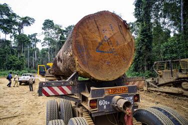 Wood Truck for the Company, Fabrique Camerounaise africa,road,horizontal,truck,landscape,logs,transportation,land,congo,climate change,lumber,cameroon,ngon,ebolowa,wood,log,logging,trunk,timber,huge,big,excavator,deforestation