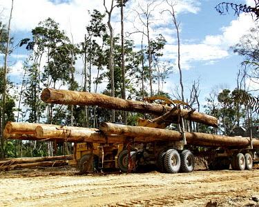 Log loader loading logs on to a truck, Indonesia horizontal,forest,truck,indonesia,flickr,logs,logging,climate change,transportation,land,lumber,wood,log,trunk,timber,loader,deforestation
