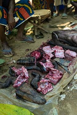 Bushmeat (crocodile and antelope) africa,animals,food,meat,foods,crocodile,congo,meats,drc,livelihoods,democratic republic of congo,bushmeat,bush meat,lukolela,market,stall,for sale,people,shallow focus
