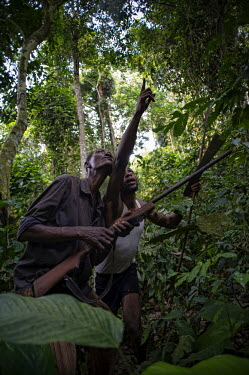 Hunters in the Tumba-Ledima Reserve africa,people,man,horizontal,forest,hunting,environment,hunter,hunters,congo,forests,rainforest,rainforests,drc,rdc,democratic republic of congo,tumba lediima reserve,hunters tools,gun,armed,livelihoo
