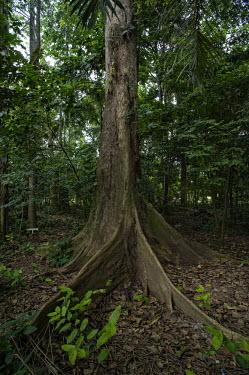Botanical Garden University of Kinsangani africa,trees,forest,leaf,roots,environment,congo,drc,rdc,democratic republic of congo,kisangani,tree,forests