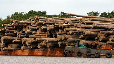 A barge transporting logs wood,tree,water,horizontal,forest,river,indonesia,scenery,logs,environment,redd,boats,boat,barge,transportation,central kalimantan,timber
