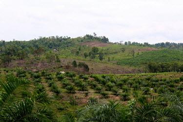 Land cleared for oil palm plantation horizontal,climate change,east kalimantan,oil palms,cleared,land clearance,habitat destruction,plantation,oil palm,palm oil,hillside,landscape,deforestation