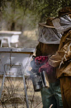 Training beekeepers to maintain hives and collect honey Africa,people,animals,horizontal,wildlife,bee,honey,hive,hives,Burkina Faso,bees,honeycomb,beekeeping,beekeepers,village of Yalka,village,villagers,locals,nets,protection,protective clothing,brush,smo