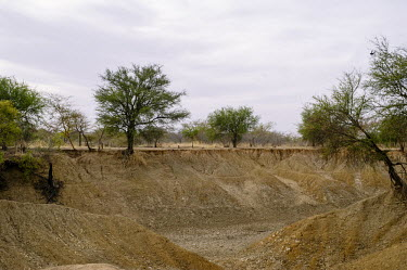 A tributary of the Nouhou river dried up due to the low water level road,trees,river,tributary,Africa,dry,climate change,cracked,Burkina Faso,Boromo,Nouhou River,mud,riverbed,low,water,levels,dried,landscape,CIFOR,forest research,adaptation,production forests