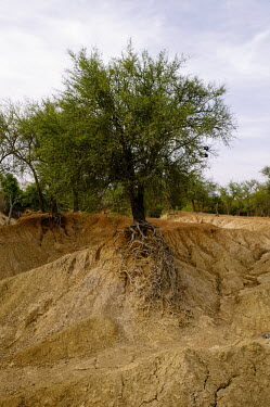 A tributary of the Nouhou river dried up due to the low water level road,trees,river,tributary,Africa,dry,climate change,cracked,Burkina Faso,Boromo,Nouhou River,mud,riverbed,low,water,levels,dried,landscape,tree,clinging,erosion,eroded,roots,showing,CIFOR,forest rese