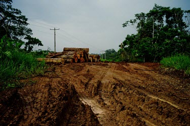 Logs near a local road in Napo Province road,wood,trees,horizontal,wooden,Ecuador,Spanish,land,environment,napo,climate change,deforestation,horizontals,deforested,logs,mud,dirt,track,log pile