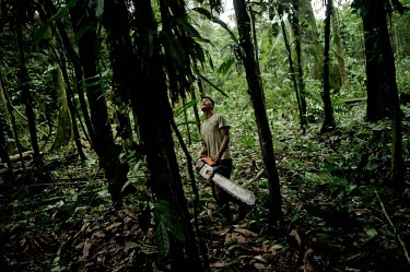 A Kichwa villager cutting down a tree to clear an area to sow corn to feed his animals people,man,tree,male,men,horizontal,forest,scenery,chainsaw,spanish,land,environment,kichwa,trees,Ecuador,cut,big tree,climate change,deforestation,orellana,horizontals,clear,clearing,villager,local,l