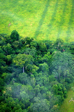 An aerial shot shows the contrast between forest and agricultural landscapes road,Brazil,Latin America,aerial,spanish,acre,deforestation,rio branco,cattle farming,contrast,forest,forests,agricultural,agriculture,landscapes,landscape,green,looking down