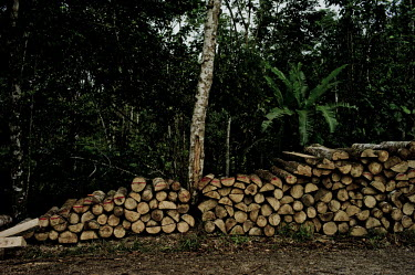 Logs near a local road trees,tree,horizontal,architecture,Ecuador,Spanish,forest,forests,timber,lumber,building materials,horizontals,wood products,pile,log pile,cut,wood,store