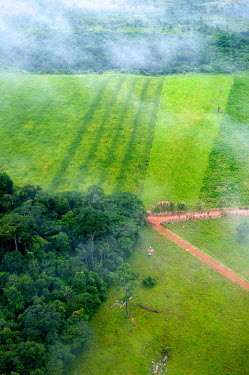 An aerial shot shows the contrast between the forest and agricultural landscapes road,rainforest,rainforests,logging,pasture,climate change,cattle farming,Brazil,Latin America,aerial,spanish,acre,deforestation,contrast,forest,forests,agricultural,agriculture,landscapes,landscape,g