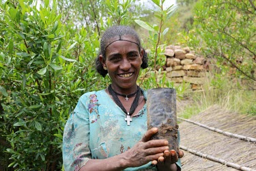 A woman holds a sapling that will be planted in a reforestation area in Tigray, Ethiopia forest landscape restoration,restoration,deforestation,reforestation,reforesting,planting,sapling,planting trees,conservation,conservation measure,plant,tree,plantae