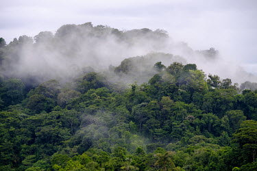 A view over the misty canopy of Costa Rican rainforest jungle,jungles,forest,forests,habitat,environment,tree,trees,canopy,landscape,Americas,Central America,Costa Rica,rainforest,tropical,tropics,mist,cloud,cloudy,Spanish