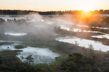 Wetland habitat at sunrise, Endla Nature Reserve, J�rva region, Estonia Wetland,wetlands,habitat,habitats,landscape,endangered habitats,water,sunrise,dawn,trees,tree,mist,misty,breeding ground