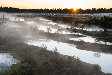 Wetland habitat at sunrise, Endla Nature Reserve, J�rva region, Estonia Wetland,wetlands,habitat,habitats,landscape,endangered habitats,water,sunrise,dawn,trees,tree,mist,misty,breeding ground