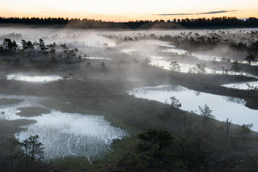 Wetland habitat at dawn, Endla Nature Reserve, J�rva region, Estonia Wetland,wetlands,habitat,habitats,landscape,endangered habitats,water,sunrise,dawn,trees,tree,mist,misty,breeding ground
