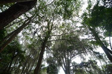 Tropical forest forest,forests,rainforest,jungle,jungles,temperate,tropical,tropics,vegetation,greenery,plants,plantlife,plant,foliage,vine,vines,canopy,habitat