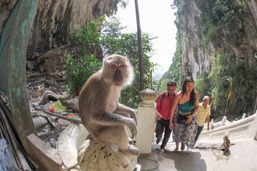 Crab-eating macaque at tourist attraction people,humans,tourists,tourist,tourism,monkey,monkeys,primates,primate,macaques,litter,rubbish,pollution,fisheye,fisheye lens,Crab-eating macaque,Macaca fascicularis,Mammalia,Mammals,Chordates,Chordat