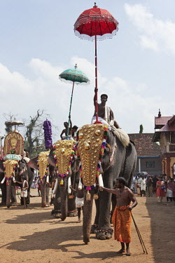 Decorated elephants at the Tripunithura Temple in a ceremony elephant,elephant ride,festival,celebration,animal cruelty,animal welfare,chain,chained up,animal entertainment,cruel,cruelty,elephants,India,mahout,people,human,humans,Asian elephant,Elephas maximus,