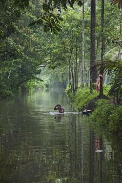 Indian man having his morning bath in a beautiful peaceful canal on Kerala backwaters human,people,people interacting with nature,river,water,stream,washing,wash,natural world,Tranquil scene,Beauty in nature