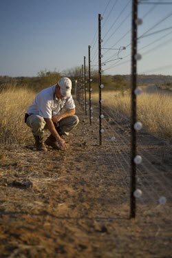 A researcher reading the tracks of free-roaming African Wild Dogs along a farmland border savannah,savanna,Africa,fence,anti-predator fence,perimeter,park,reserve,boundary,conservation,monitoring,tracks,warden,human,African wild dog,Lycaon pictus,Carnivores,Carnivora,Mammalia,Mammals,Chord