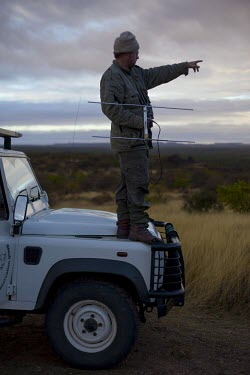 A researcher standing on a Land Rover while tracking African wild dogs using radio telemetry equipment savannah,savanna,Africa,conservation,monitoring,tracks,tracking,radio tracking,warden,human,African wild dog,Lycaon pictus,Carnivores,Carnivora,Mammalia,Mammals,Chordates,Chordata,Dog, Coyote, Wolf, F