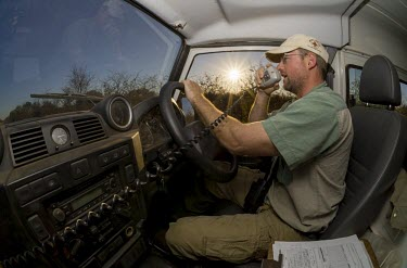 A researcher using a radio to relay the position of an African Wild Dog pack from inside a Land Rover wild dog,hunting dog,African hunting dog,canine,savannah,savanna,hunter,predator,carnivore,Africa,tired,yawn,teeth,jaw,mouth,African wild dog,Lycaon pictus,Carnivores,Carnivora,Mammalia,Mammals,Chorda