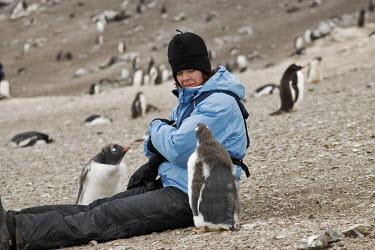 Gentoo penguins with tourists bird,birds,birdlife,penguin,penguins,tourism,tourist,human,humans,people,ecotourism,wildlife tourism,Gentoo penguin,Pygoscelis papua,Sphenisciformes,Penguins,Chordates,Chordata,Aves,Birds,Spheniscidae
